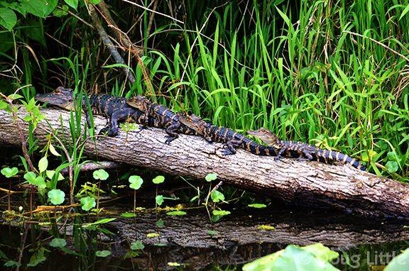 St. John's River Eco Tours
